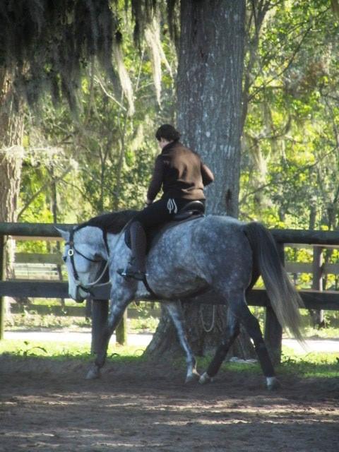 Geneviève Benoit VifArgent Horsemanship